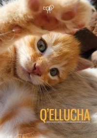 Q'ellucha (ampliar imagen)